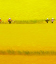 Harvest season 04-60x100-TN