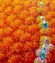 Red flower field 01-Original Vietnamese Art