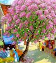 Charming spring