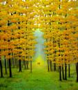 Autumn morning-100x100