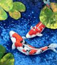 Lucky Koi Fishes 03-60x60